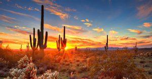 arizona's noble and iconic saguaro cactus